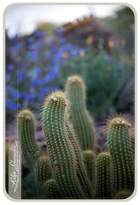 Desert Botanical Gardens_Arizona Wedding